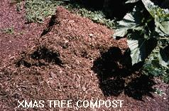 Photo of Christmas Tree compost.